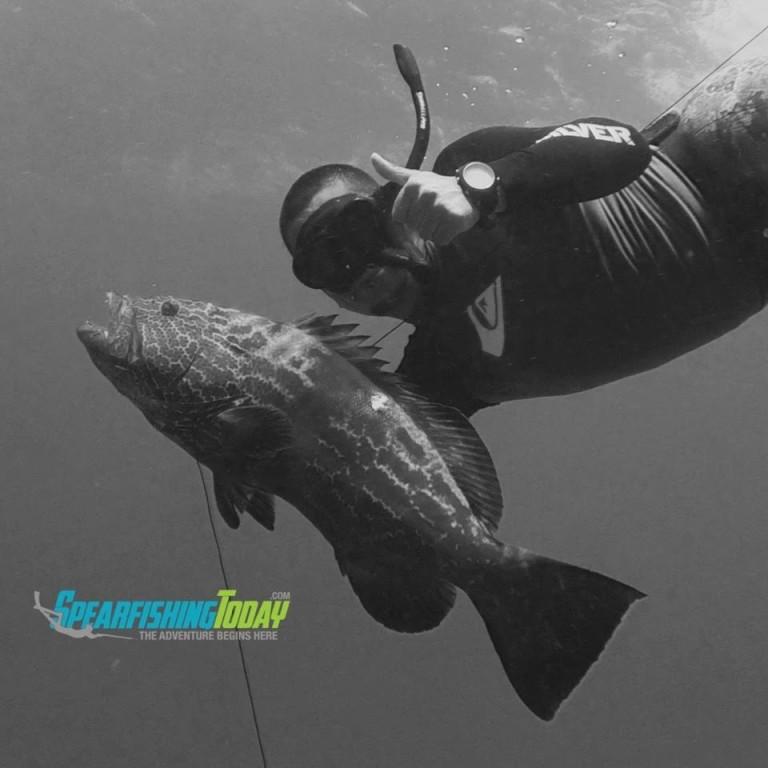 grouper season