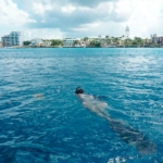 padi freediving course certification