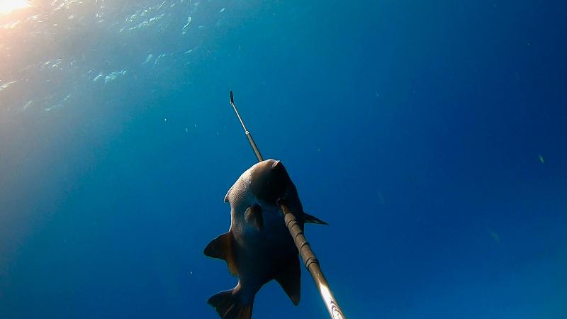 gopro freediving spearfishing