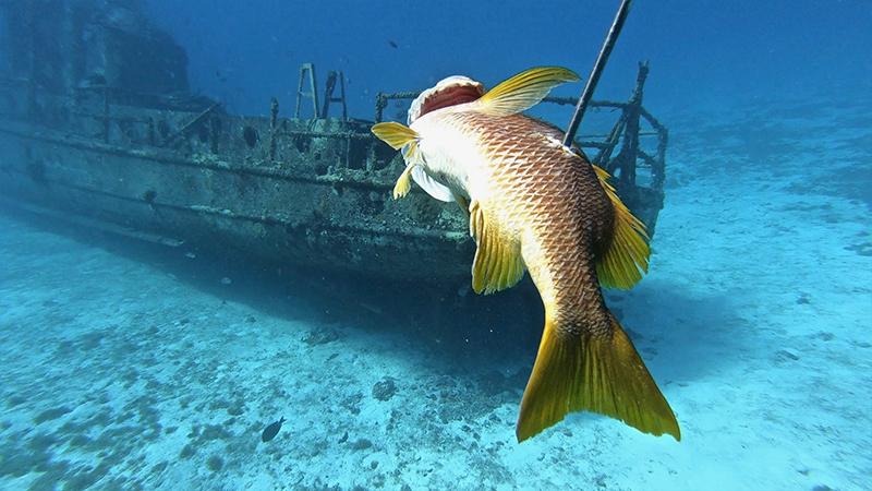 Fishing Cozumel Cruise