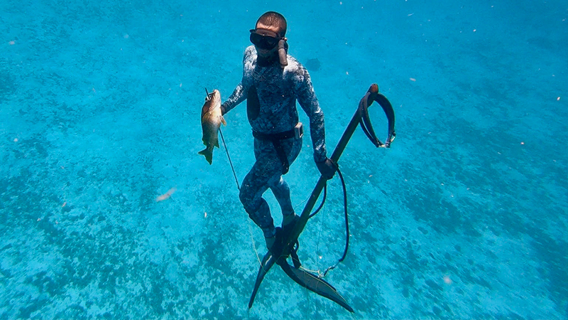 Freediving spearfishing catch