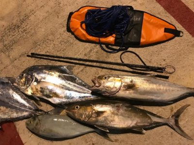 Freediving Spearfishing Mexico