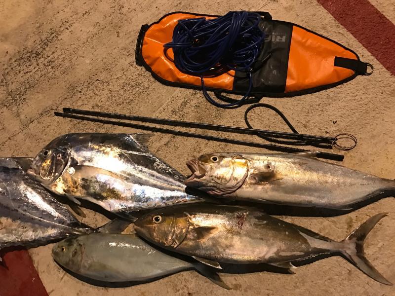 Freediving Spearfishing Mexico