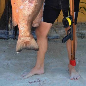 Spearfishing Mexico Best
